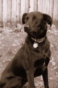 Michigan Pet Trust